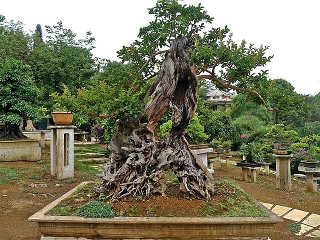 镇宁黄果树盆景园 高清图片