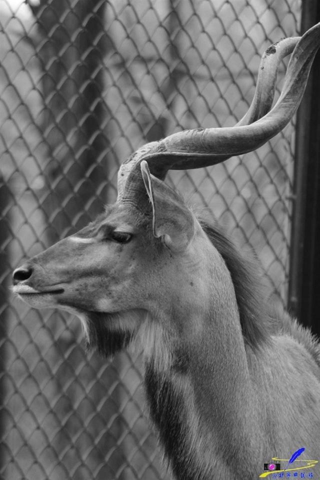 野生动物们的远离故乡的日子