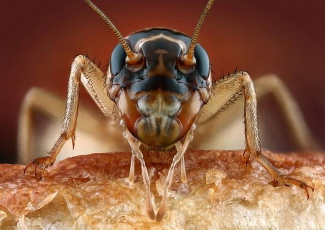 反接镜头下的昆虫面孔