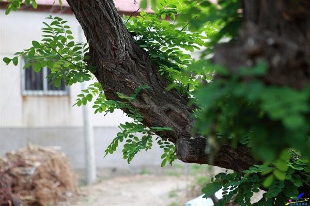 莱芜市钢城区沙岭子村,避暑宁静的小山村